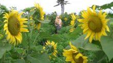 Wisata Jogja Terbaru – Spot Indah Terbaru di Jogja Yang Musti Dikunjungi